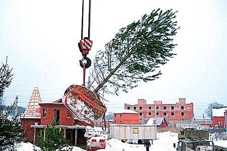 Зимняя пересадка деревеьев