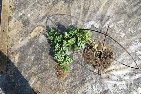 Как вырастить урожай на заброшенной земле