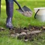 Зола и компост для растений