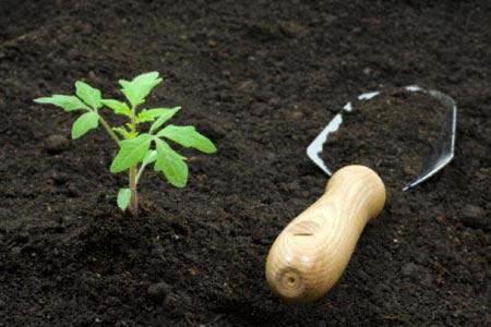 Как сделать компост из навоза и торфа