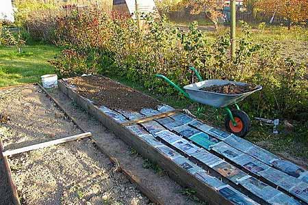 Как вырастить отменный урожай лука