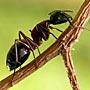 Как защитить деревья от муравьев