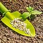 Как вырастить семена огурцов