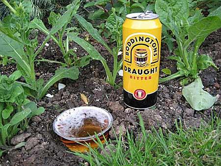 Пиво против слизней