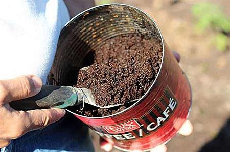 Молотый кофе как удобрение
