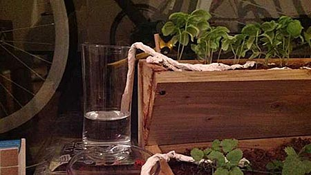 Бумажное полотенце для полива растений