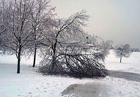 """Последствия """"ледяного дождя"""""""
