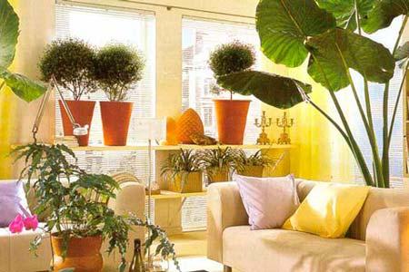 Зачем в квартире нужны комнатные растения