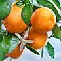 Что лечить апельсин