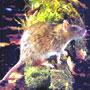Как избавиться от мышей и насекомых