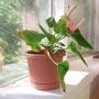 Комнатные растения (полезные советы)