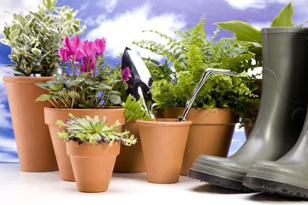Рассада цветов - главные ошибки при покупке