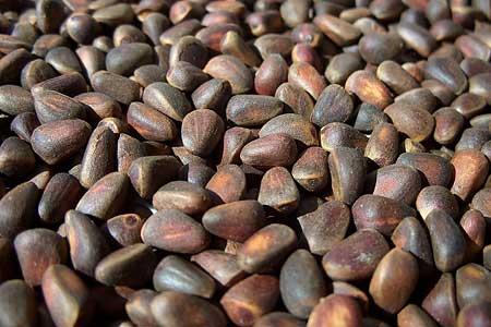 Торговля орешками