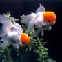 Аквариумные рыбки - как заработать на разведении