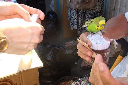 Попугай и заработок