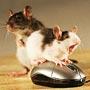 Что умеет делать компьютерная мышь