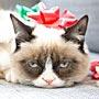 Ненавижу праздники