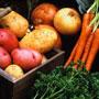 Как приготовить салаты из корнеплодов