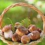 Как собирать и что приготовить из грибов